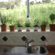 Growing Herbs Indoors Mystical Magical