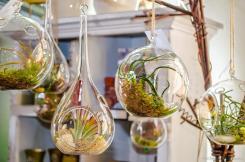 Hanging Glass Bubble Terrarium Air Plants Container Pots