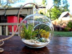 Hanging Terrarium Bubble Glass Air Plant Containers Pots