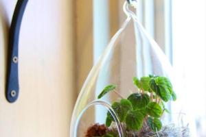 Hanging Terrarium Ideas