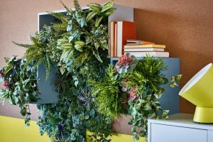 Houseplants Basic Guide Growing