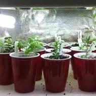 Interesting Led Kitchen Garden Supporting Proper Herb