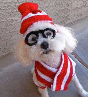 Last Minute Diy Halloween Costumes Your Dog Broke
