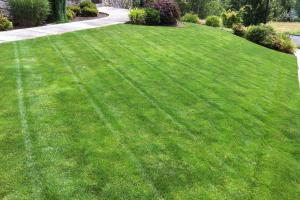 Lawn Care Tips Getting Your Grass Green Again After