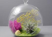 Lime Air Plant Terrarium Seaandasters Etsy