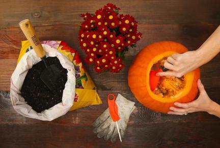 Liveabode Diy Pumpkin Planters