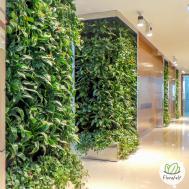 Living Walls Terragarden Kuwait Plants