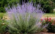 Low Maintenance Perennial Flowers Can Grow Your