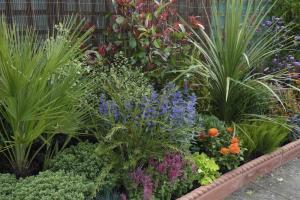 Low Maintenance Plants Bushes Margarite Gardens