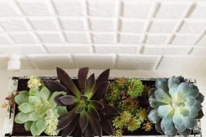 Make Diy Window Box Garden Succulents