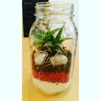 Mason Jar Succulents Kit Terrarium Succulent