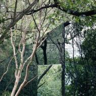 Mirrored Home Woods Hidden Plain Sight