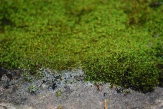 Moss Stone Gardens Blog