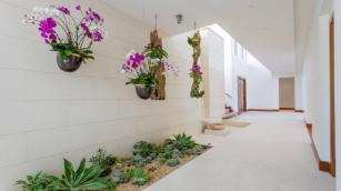 Most Amazing Air Plant Display Ideas