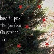Pick Perfect Christmas Tree Stephanie Thomas
