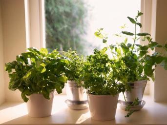 Plant Windowsill Herb Garden Tos Diy