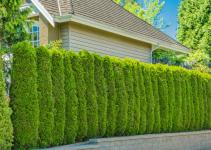 Privacy Screen Plants Home Decoration