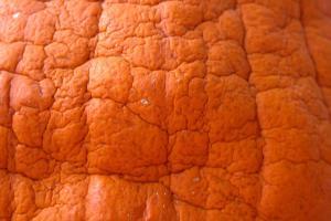 Pumpkin Decaying Wrinkled Halloween