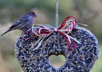 Rebecca Bird Gardens Blog Diy Heart Feeders