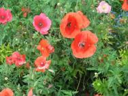 Shade Garden Flowers Plants Shady Areas Pin