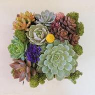 Succulent Gift Arrangement Wooden Box