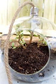 Succulent Terrarium Diy Unblurred Lady