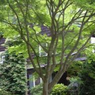 Sweet Home Garden Carolina Design Lessons Mother