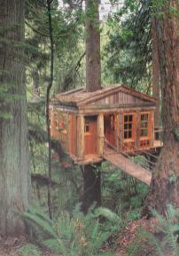 Terrierman Daily Dose Cabin Woods