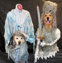 Terrifying Hilarious Dog Costumes Rover Blog