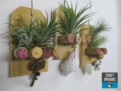 Tillandsia Cork Plaque Craft Organic
