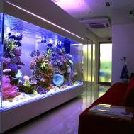 Top List World Coolest Aquariums Fails
