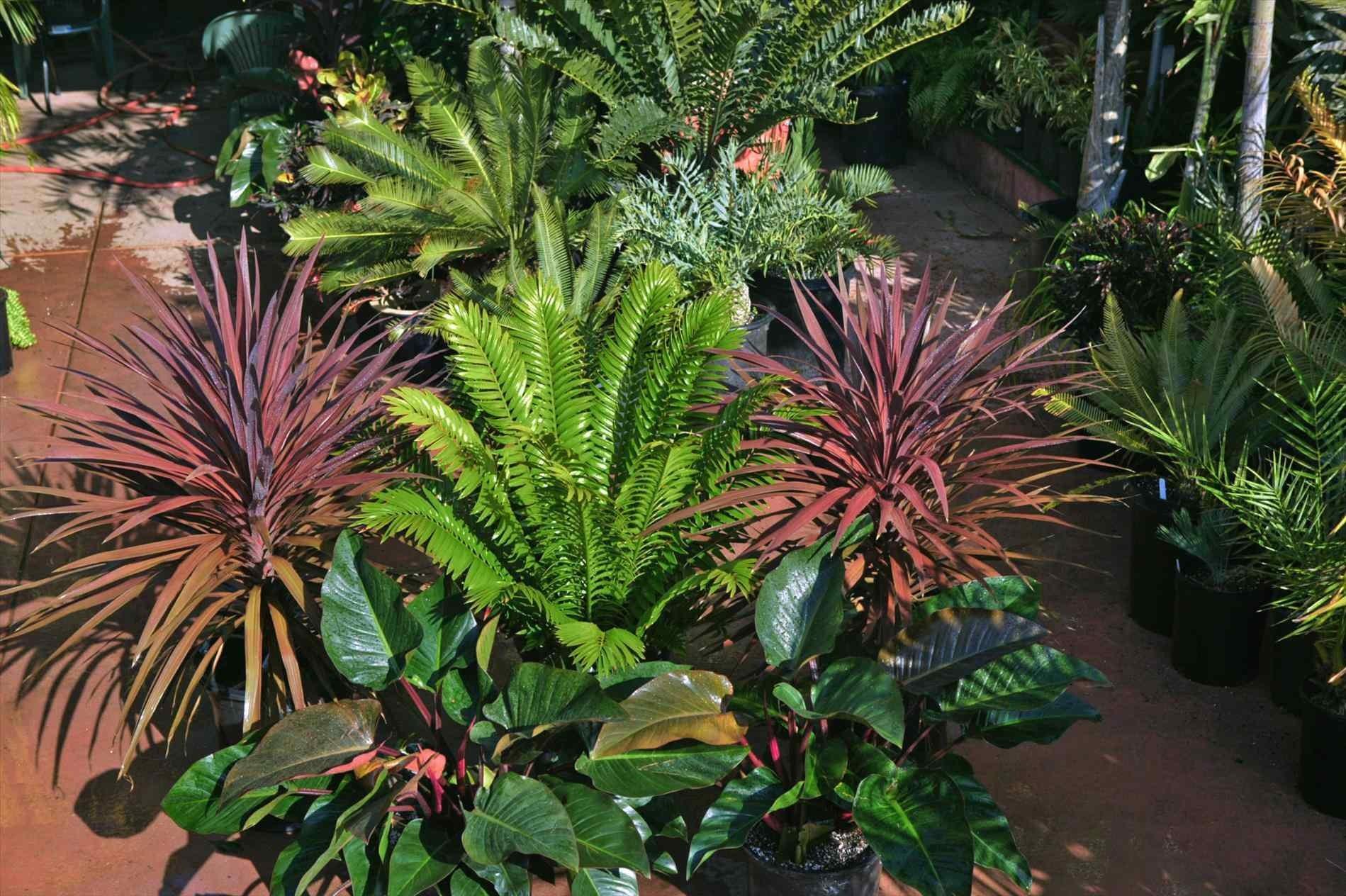 Tropical Garden Plants Sun Darxxidecom - Decoratorist - #57939