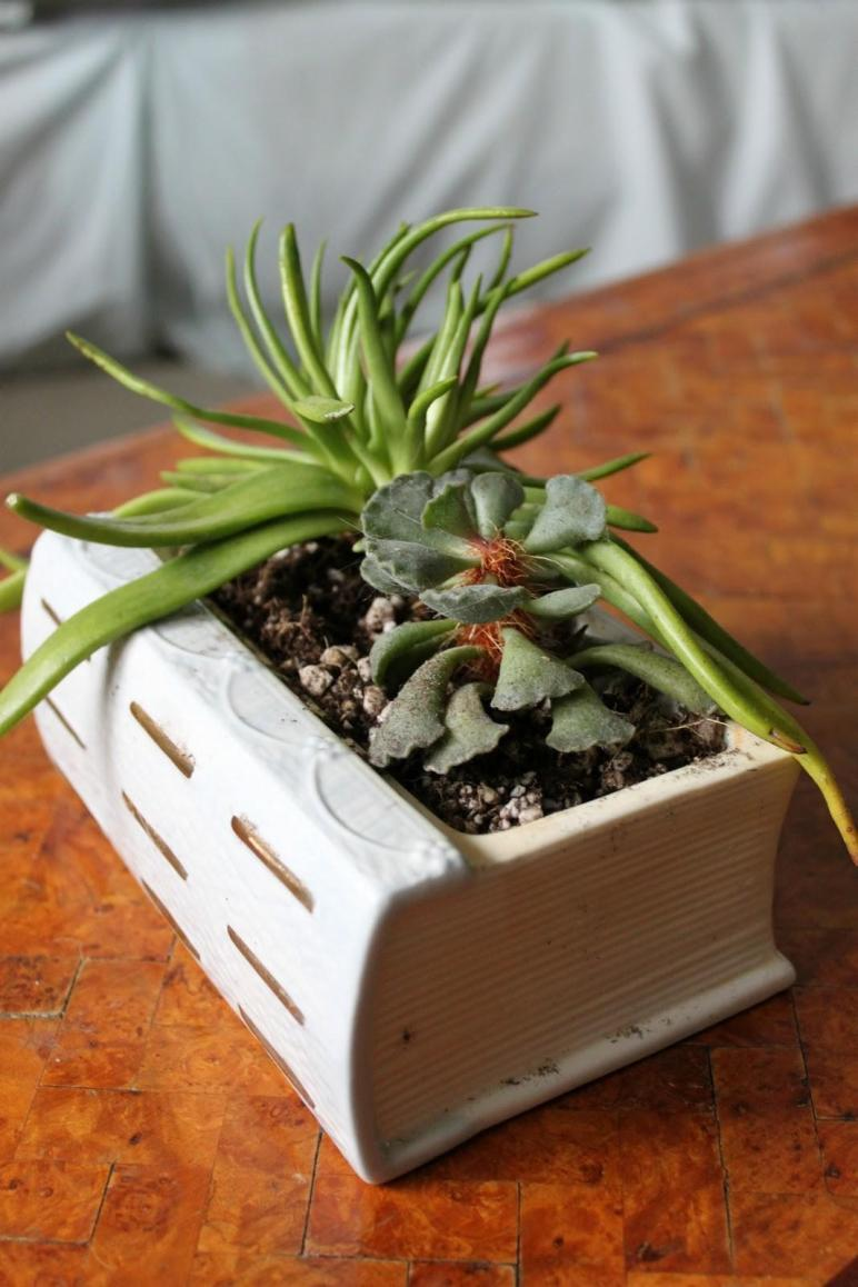 Turn Old Book Into Planter Your Succulents