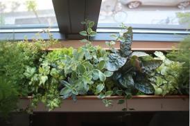 Upgrade Diy Terrarium Inspired Window Box Lonny