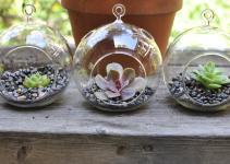 Voil Succulent Terrariums