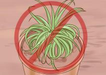 Ways Care Air Plants Wikihow