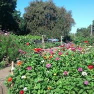 Windmill Farm Planting Flowers Vegetables Using