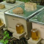 Woodwork Diy Hive Plans Usda Beekeeping Pdf
