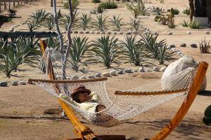 Yoga Retreats Mexico Prana Del Mar