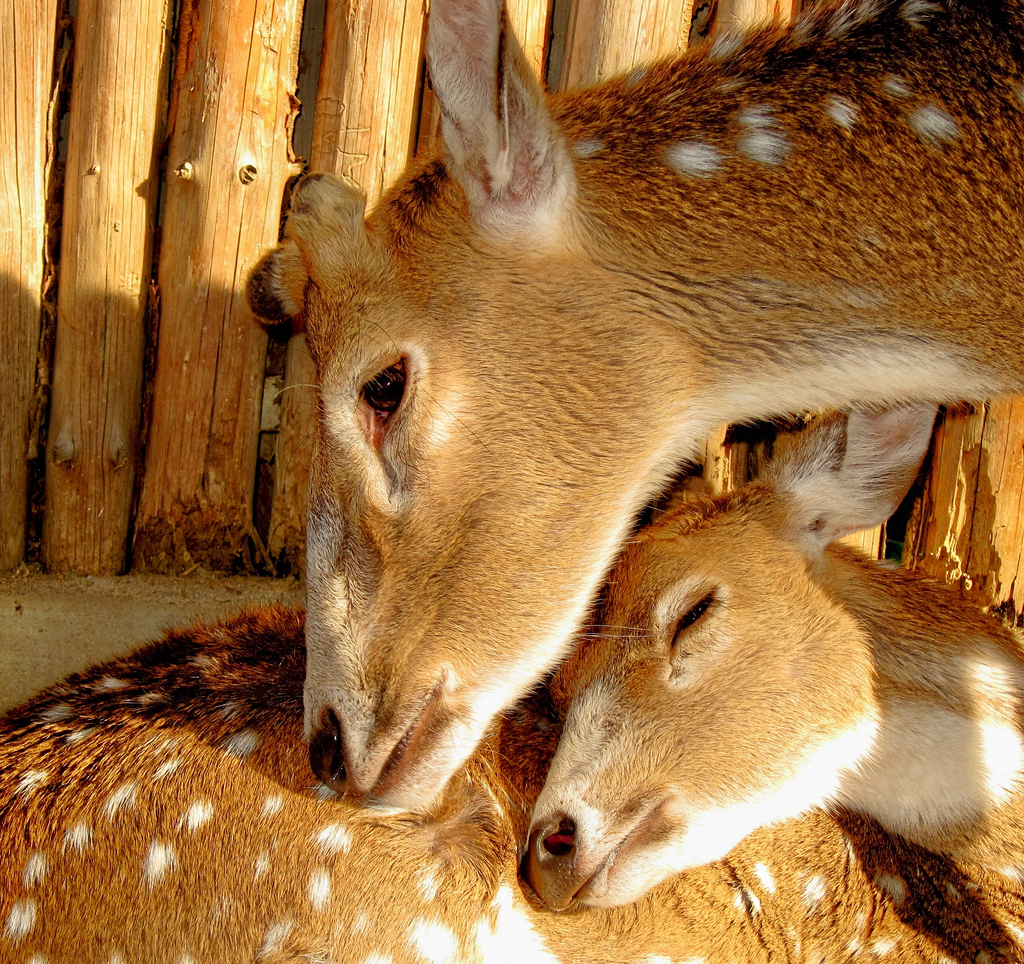 25 Emotional Mother And Baby Animal Photos From Wildlife