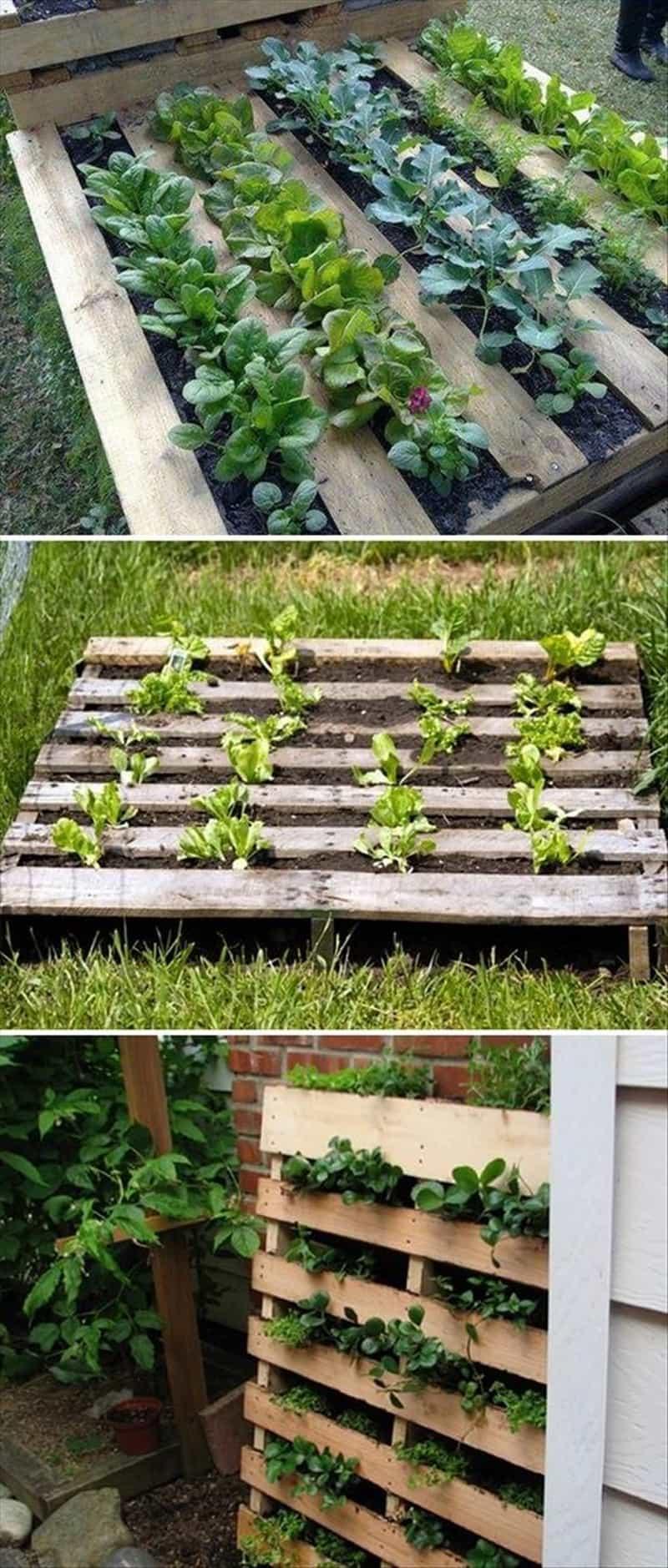 How Build Raised Garden Vegetables
