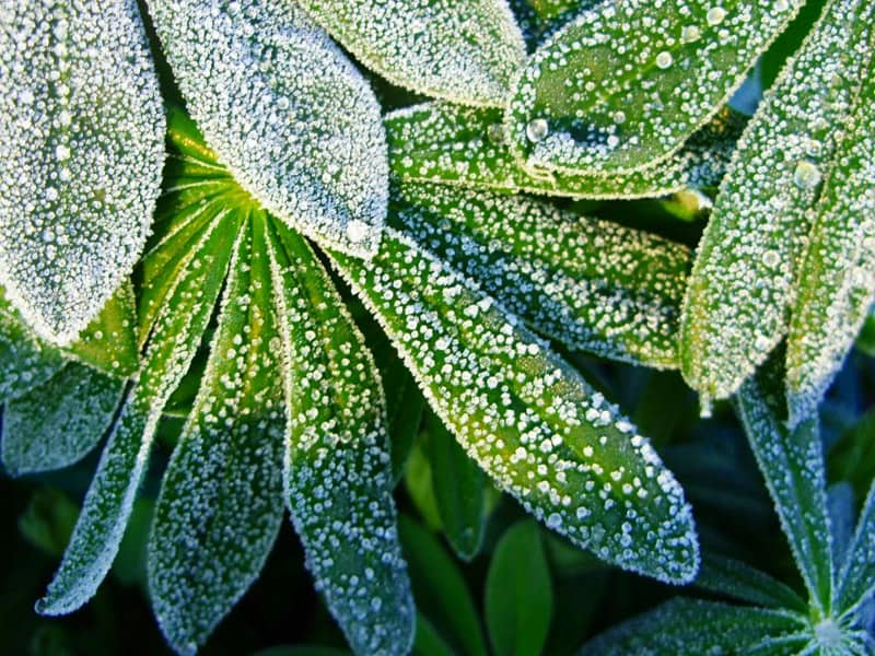 Frost Protection Fabrics Tips To Protect Plants And Trees