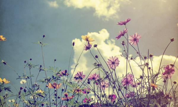 Pain: A Secret Garden of Pride