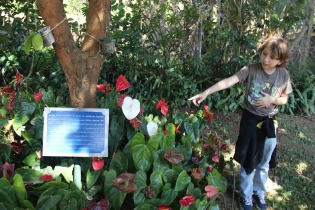 O menino nos leva à arvore de pau-brasil onde as cinzas de Walter Steurer foram jogadas e sintetiza a obra do criador do projeto