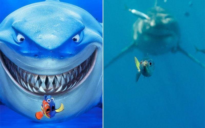 A cena do filme mostra os personagens, Marlin e Dory, que tentam escapar do perigoso predador Bruce.