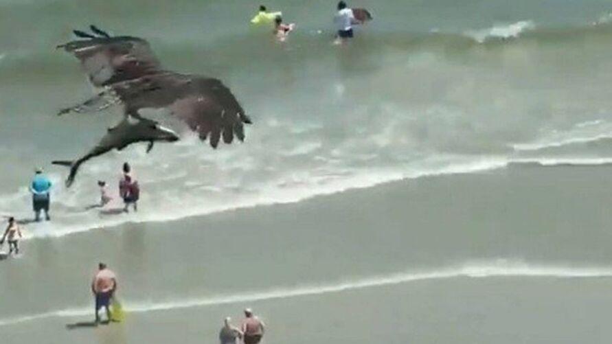 """Vídeo de água """"pescando"""" tubarão do mar continua intrigando internautas e é real."""