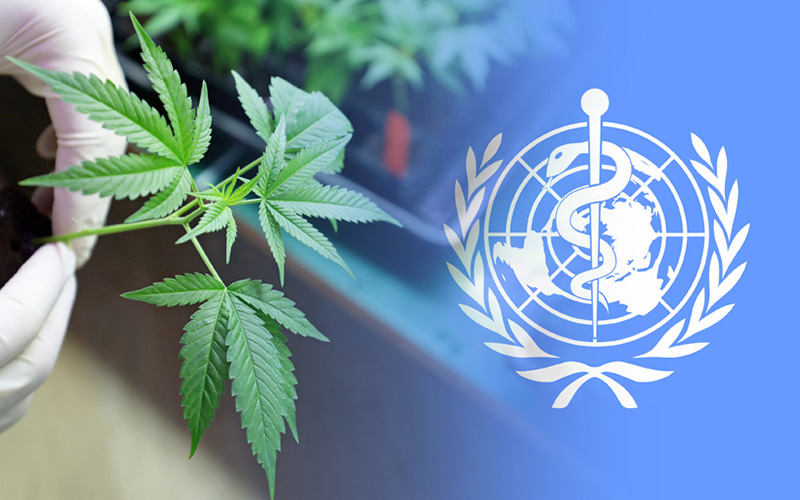 oms-cannabis_00598966_0_.jpg?xid=1326325