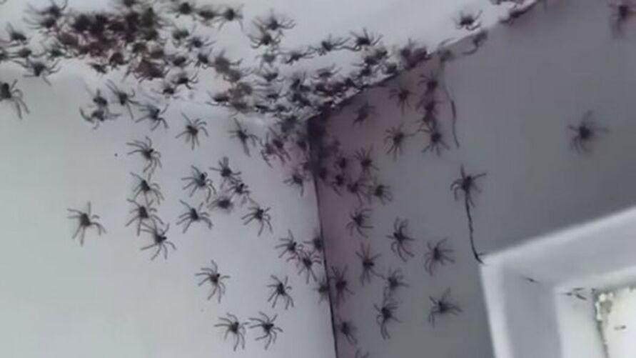 A mulher resolveu que não iria matar os insetos por deixar a natureza seguir seu curso