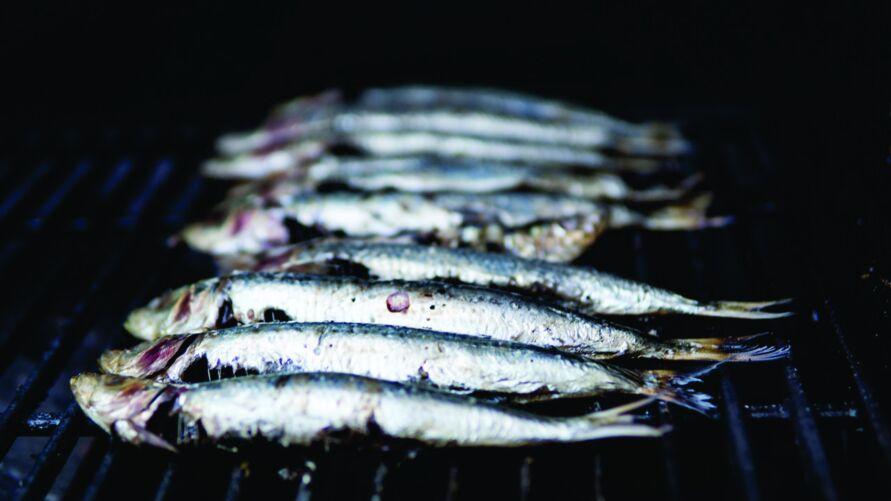 Imagens da pesca da sardinha na praia de Ajuruteua, em Bragança, chamam a atenção pela fartura