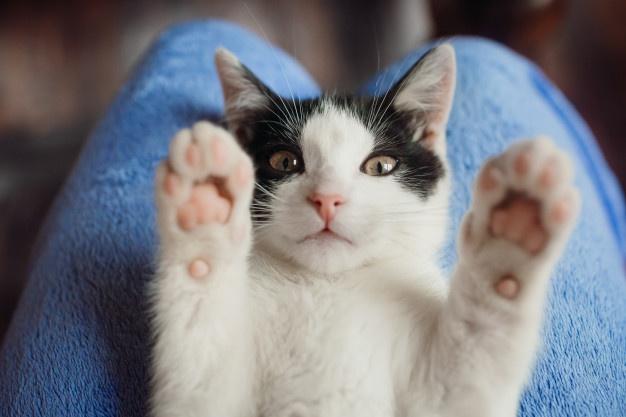 Imagem ilustrativa da notícia: Você sabe mesmo para que servem os bigodes dos gatos?